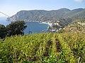 Vignoble de Monterosso al Mare.jpg