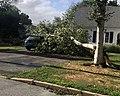WATERFORD CT TREE ISAIAS.jpg