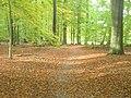 Waldweg bei Neue Muehle (Woodland Path by Neue Muehle) - geo.hlipp.de - 29534.jpg
