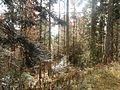 Wanderung im November - panoramio (44).jpg
