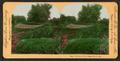 Washington Park, Chicago, Ill., U.S.A, by Keystone View Company.png