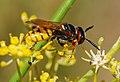 Wasp August 2007-7.jpg
