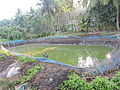 Water well for irrigation, Havelock Island, Andaman Islands, India.JPG