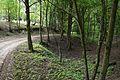 Wawoz kolo jez. Lesnego, Puszcza Zielonka 02.JPG