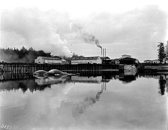 Murder Cove - Tyee Company whaling station, August 1910