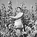 Wijnkoningin Mosella poseert in de wijngaard, Bestanddeelnr 254-4179.jpg