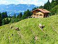 WikiProjekt Landstreicher Südhang Grünten 06.jpg