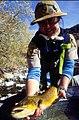 Wild trout project e walker river bridgeport0115 brown trout (26002892120).jpg