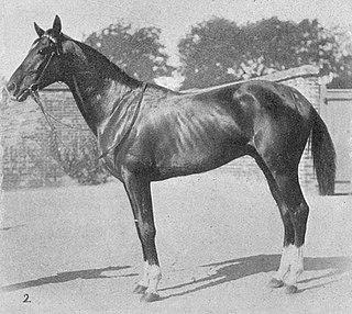Wildfowler (horse) Irish-bred Thoroughbred racehorse