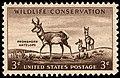 Wildlife antelope 1956 U.S. stamp.1.jpg