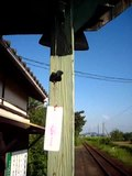 File:Wind chime in Japan.ogv