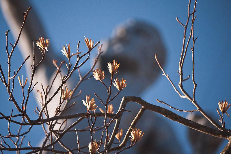 File:Winter Tree (5333924454).jpg