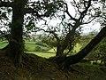 Woodland edge - geograph.org.uk - 1021920.jpg