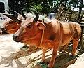 Xe bò Củ Chi tại địa đạo Củ Chi.jpg