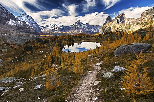 Yoho National Park Fall Colors.jpg