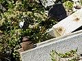 Zentralfriedhof Wien zerstörte Grabsteine Bombenangriffe 01.jpg
