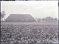 Zicht op de boerderij en de losstaande schuur - Halsteren - 20450215 - RCE.jpg