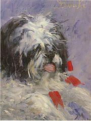 Douki, chien griffon