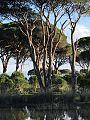 Δάσος Στροφυλιας.jpg