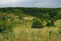 Балка в западной части урочища Гомольшанский лес.jpg