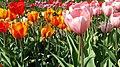 БотаническийСадCH6.jpg