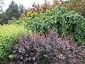 Ботанічний сад ДНУ 4.JPG