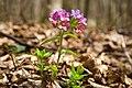 Весняні квіти в лісі.jpg
