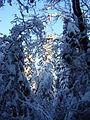 В темно-синем лесу - panoramio.jpg
