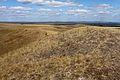 Гора Моховая - panoramio (1).jpg