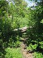 Дендрологічний парк 153.jpg
