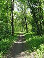 Дендрологічний парк 174.jpg