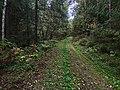 Дорога в Сухой лог 2.jpg