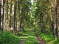 Дорожка через лес - panoramio.jpg