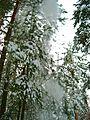 Лавина -) - panoramio.jpg
