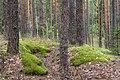 Лесной массив у села Теребень 2.jpg