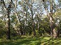 Лісова ділянка 02.jpg