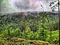 Ліс за селом після дощу.jpg