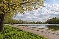 Май в Озерковом парке. Никольский пруд. Вид с севера..jpg