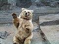 Николаевский зоопарк. Медведь. - panoramio.jpg