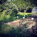 Огород в Дворяниново.jpg