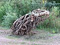 "Один из ""обитателей"" Сакмары - КРЫСЬМИНОГ- ""Inhabitant"" of Sakmara River - panoramio.jpg"