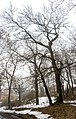 Парк аграрного технікуму, м. Полтава - 2016-02-15 004.jpg