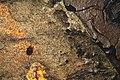 """Предреставрационное исследование иконы """"Николай Чудотворец"""" 19в. фрагмент 1.JPG"""