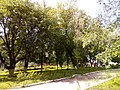 Прилуцький дендропарк Прилуцький район, м. Прилуки, вул. Вавилова, 16 74-107-500 13.jpg