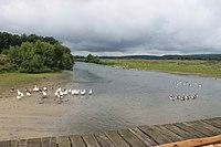 Річка Ворсклиця.JPG