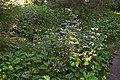 Сирецький дендрологічний парк DSC 0024.jpg