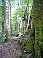 Сочинский национальный парк (4).JPG