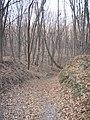 Украина, Киев - Голосеевский лес 260.jpg