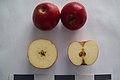 Яблоня сорта Джонатан М-41.jpg