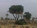 الجزء الخلفى لمعبد الاقصر.jpg